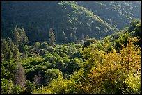 Dense springtime vegetation on Tule River Valley slopes. Giant Sequoia National Monument, Sequoia National Forest, California, USA ( )