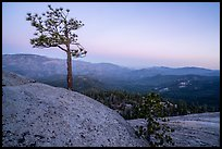 Tree on Dome Rock. Giant Sequoia National Monument, Sequoia National Forest, California, USA ( )