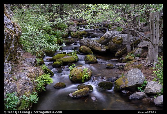 Creek in forest, Middle Fork Tule River. Giant Sequoia National Monument, Sequoia National Forest, California, USA (color)
