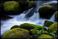 Mossy boulders, Middle Fork Tule River. Giant Sequoia National Monument, Sequoia National Forest, California, USA ( )