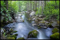 Middle Fork Tule River flowing in forest. Giant Sequoia National Monument, Sequoia National Forest, California, USA ( )