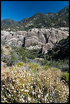 Wildflowers, sandstone fins, and mountains. San Gabriel Mountains National Monument, California, USA ( color)