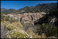 Wildflowers, sandstone fins in Punchbowl Canyon. San Gabriel Mountains National Monument, California, USA ( color)