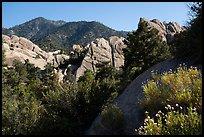 Wildflowers, Devils Punchbowl sandstone. San Gabriel Mountains National Monument, California, USA ( )