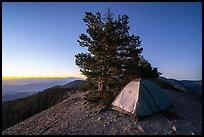 Tent on Mount Baldy Devils Backbone at dawn. San Gabriel Mountains National Monument, California, USA ( )