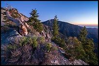 Wildflowers and trees on Mt Baldy Devils Backbone ridge at dawn. San Gabriel Mountains National Monument, California, USA ( )