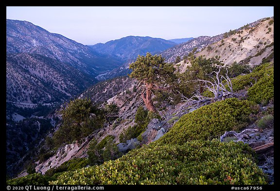 San Antonio Canyon from Mt Baldy at dawn. San Gabriel Mountains National Monument, California, USA (color)