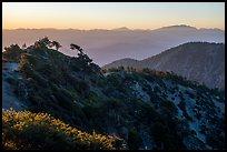 Mount San Antonio's Devils Backbone ridge at sunrise. San Gabriel Mountains National Monument, California, USA ( )