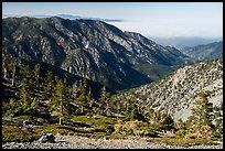 Subalpine forest on Mount San Antonio. San Gabriel Mountains National Monument, California, USA ( )