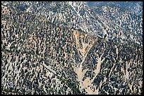 Slopes below Ontario Peak. San Gabriel Mountains National Monument, California, USA ( )