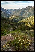 Wildflowers and Rattlesnake Peak. San Gabriel Mountains National Monument, California, USA ( )