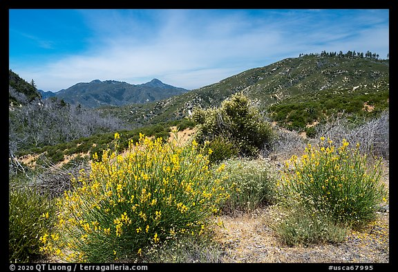 Shrubs in bloom and Strawberry Peak. San Gabriel Mountains National Monument, California, USA (color)