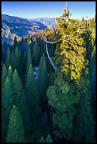 Aerial view of Boole Tree and Kings Canyon. Giant Sequoia National Monument, Sequoia National Forest, California, USA ( color)