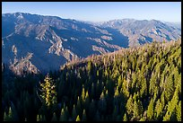 Aerial view of Converse Basin with Boole Tree and Kings Canyon. Giant Sequoia National Monument, Sequoia National Forest, California, USA ( color)
