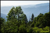 Hazy ridges from Converse Basin. Giant Sequoia National Monument, Sequoia National Forest, California, USA ( color)