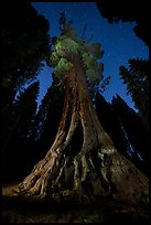 Boole Tree and starry sky. Giant Sequoia National Monument, Sequoia National Forest, California, USA ( color)