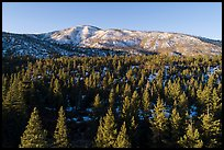 Aerial view of pine forest and Grinnel Mountain in winter. Sand to Snow National Monument, California, USA ( )