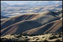 Foothills, Caliente Range. Carrizo Plain National Monument, California, USA ( )
