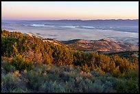 Shurbs and juniper on Caliente Ridge above plain. Carrizo Plain National Monument, California, USA ( )