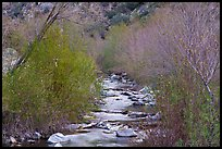 San Gabriel River flowing between newly leafed trees. San Gabriel Mountains National Monument, California, USA ( )