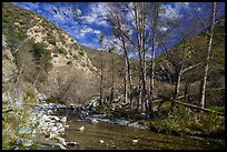 East Fork of San Gabriel River in late winter. San Gabriel Mountains National Monument, California, USA ( )