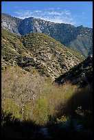 Trees with new leaves and shadows in deep East Fork San Gabriel River Canyon. San Gabriel Mountains National Monument, California, USA ( )