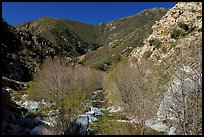 San Gabriel River flowing in canyon with newly leafed trees. San Gabriel Mountains National Monument, California, USA ( )