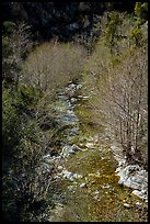 San Gabriel River flowing between trees with new leaves. San Gabriel Mountains National Monument, California, USA ( )