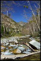 San Gabriel River flowing over rocks and framed by bare trees, Sheep Mountain Wilderness. San Gabriel Mountains National Monument, California, USA ( )