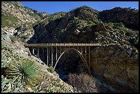 Yucca and Bridge to Nowhere. San Gabriel Mountains National Monument, California, USA ( )