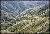 Forested hills, front range. San Gabriel Mountains National Monument, California, USA ( )