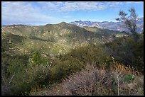 Shrubs, hills, and peak from Glendora Ridge. San Gabriel Mountains National Monument, California, USA ( )