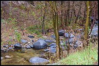 Arroyo Seco flowing in lush riparian environment. San Gabriel Mountains National Monument, California, USA ( )