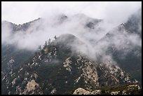 Peaks in fog above Bear Canyon. San Gabriel Mountains National Monument, California, USA ( )