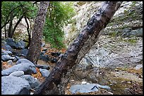 Arroyo Seco flowing in canyon. San Gabriel Mountains National Monument, California, USA ( )