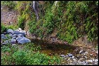 Lush Arroyo Seco canyon with ferns on walls. San Gabriel Mountains National Monument, California, USA ( )