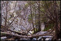 Fallen trees across Arroyo Seco canyon. San Gabriel Mountains National Monument, California, USA ( )
