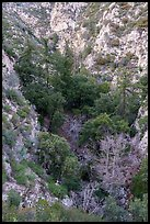 Bear Canyon from above. San Gabriel Mountains National Monument, California, USA ( )