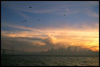 City skyline with sunset clouds and flying seabirds seen from Treasure Island. San Francisco, California, USA ( color)