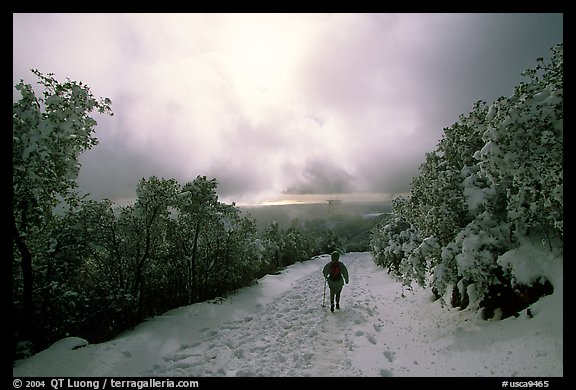 Summit trail after a snow-storm, Mt Diablo State Park. California, USA