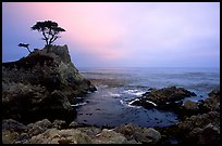 Lone Cypress, cloudy sunset, seventeen-mile drive. Pebble Beach, California, USA