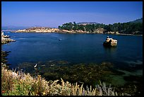 Whalers cove. Point Lobos State Preserve, California, USA ( color)