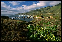 Wildflowers and jagged coast, Garapata State Park. Big Sur, California, USA