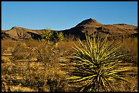 High desert landscape. Mojave National Preserve, California, USA (color)