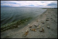 Pictures of Salton Sea