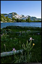 Wild Iris and Frog Lake, afternoon. Mokelumne Wilderness, Eldorado National Forest, California, USA (color)
