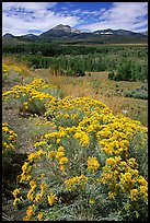 Sagebrush and Sierra, Conway summit. California, USA ( color)