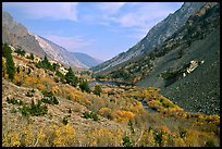 Valley with fall colors, Lundy Canyon, Inyo National Forest. California, USA ( color)