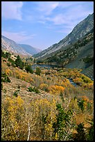 Lundy Canyon in the fall, Inyo National Forest. California, USA ( color)