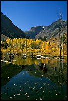 Pond and trees in autumn, Lundy Canyon, Inyo National Forest. California, USA ( color)